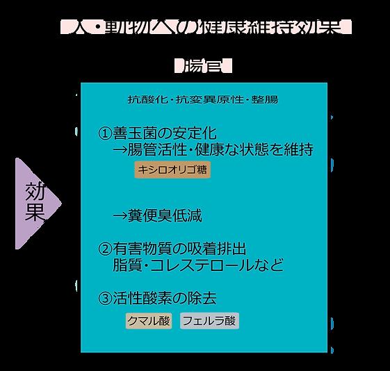 有効成分の健康維持作用(人・動物)_修正.png
