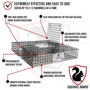 Squirrel-Guard-Infographic.jpg