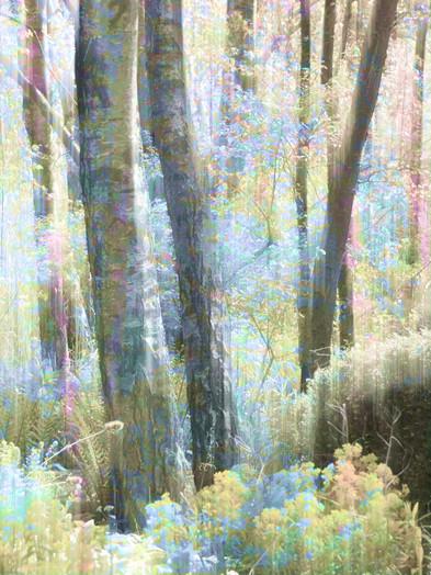 Impressionist Pensthorpe.jpg