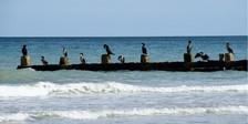 1-Cormorantson breakwater.jpg