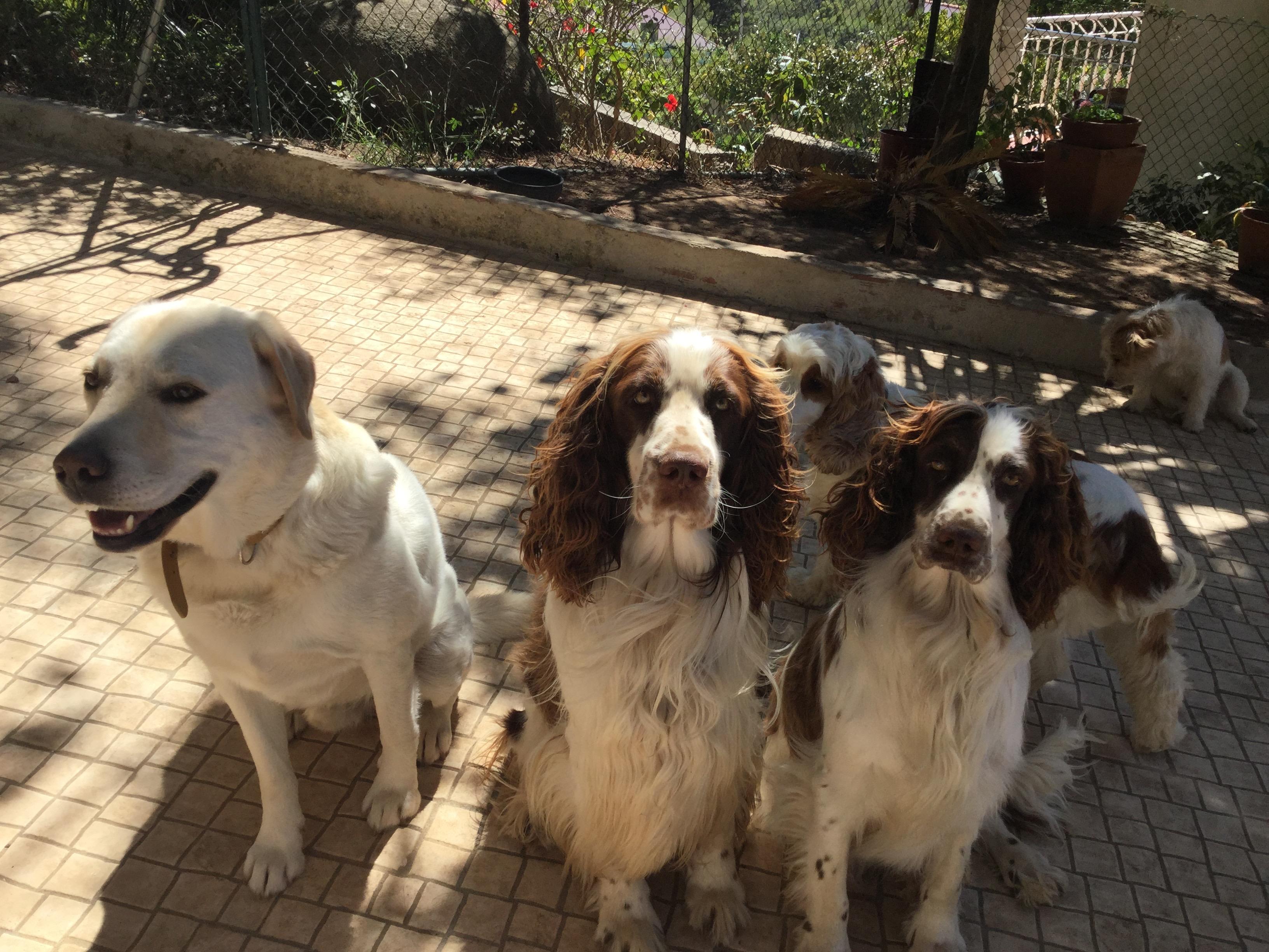 Tobias, Ben e Chloe SweetPet
