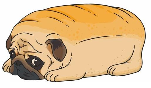 Obesidade em cães de companhia