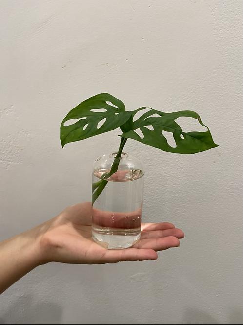 """Buds Vase Short 4"""""""