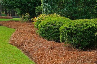 Sod, Mulch & Pine Straw Installation