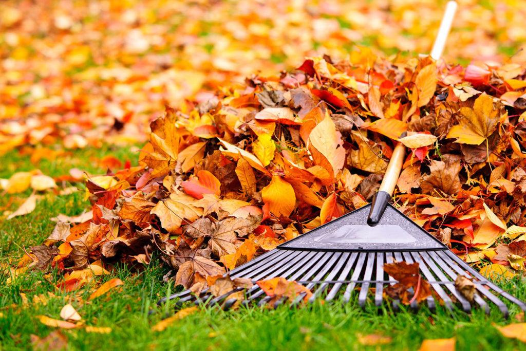 Yard, Leaf & Grounds Pick Up