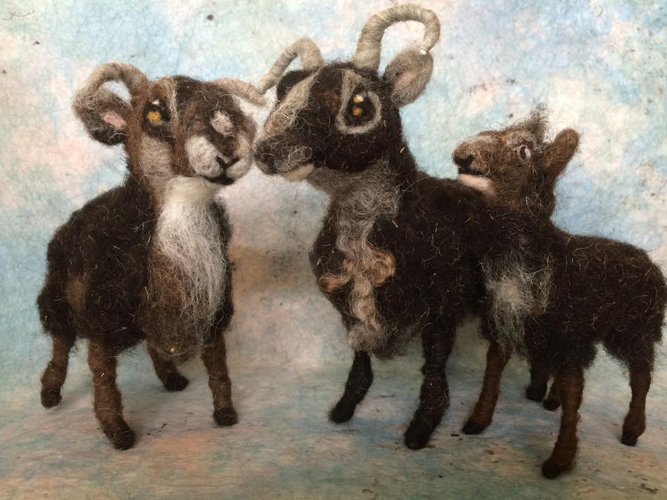 Soay Sheep Family