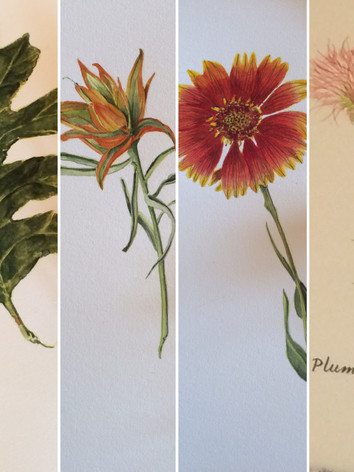 The Plants of Ghost Ranch