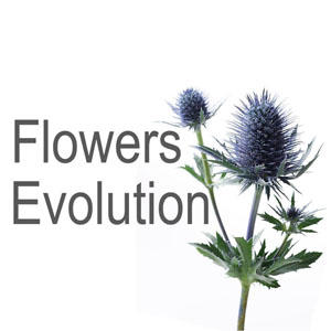 Flowers Evolution