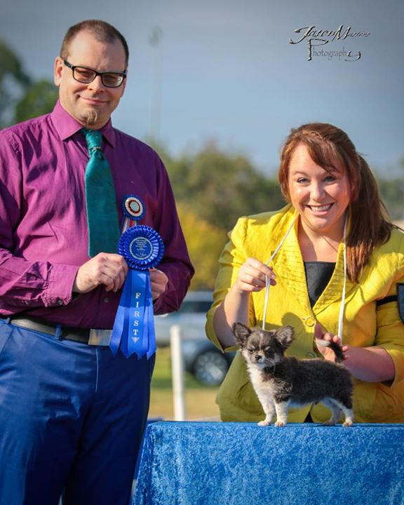 _Ashblanc Blue Ensign_, Banner wins best opposite baby puppy on his 3 month birthday, his first ever