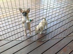 Furrari Puppies 5
