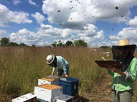 Hive inspections in prairie.jpg