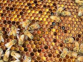 Prarie pollen.jpg