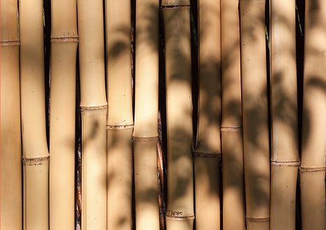 Bamboo picture.png
