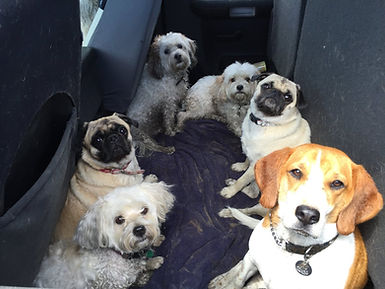 Richmond Dog Training Class