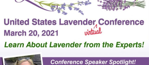 Discover Lavender for Health and Beauty
