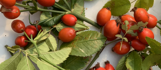 Natural Beauty with Rose Hips