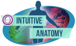 intutive-anatomy.png