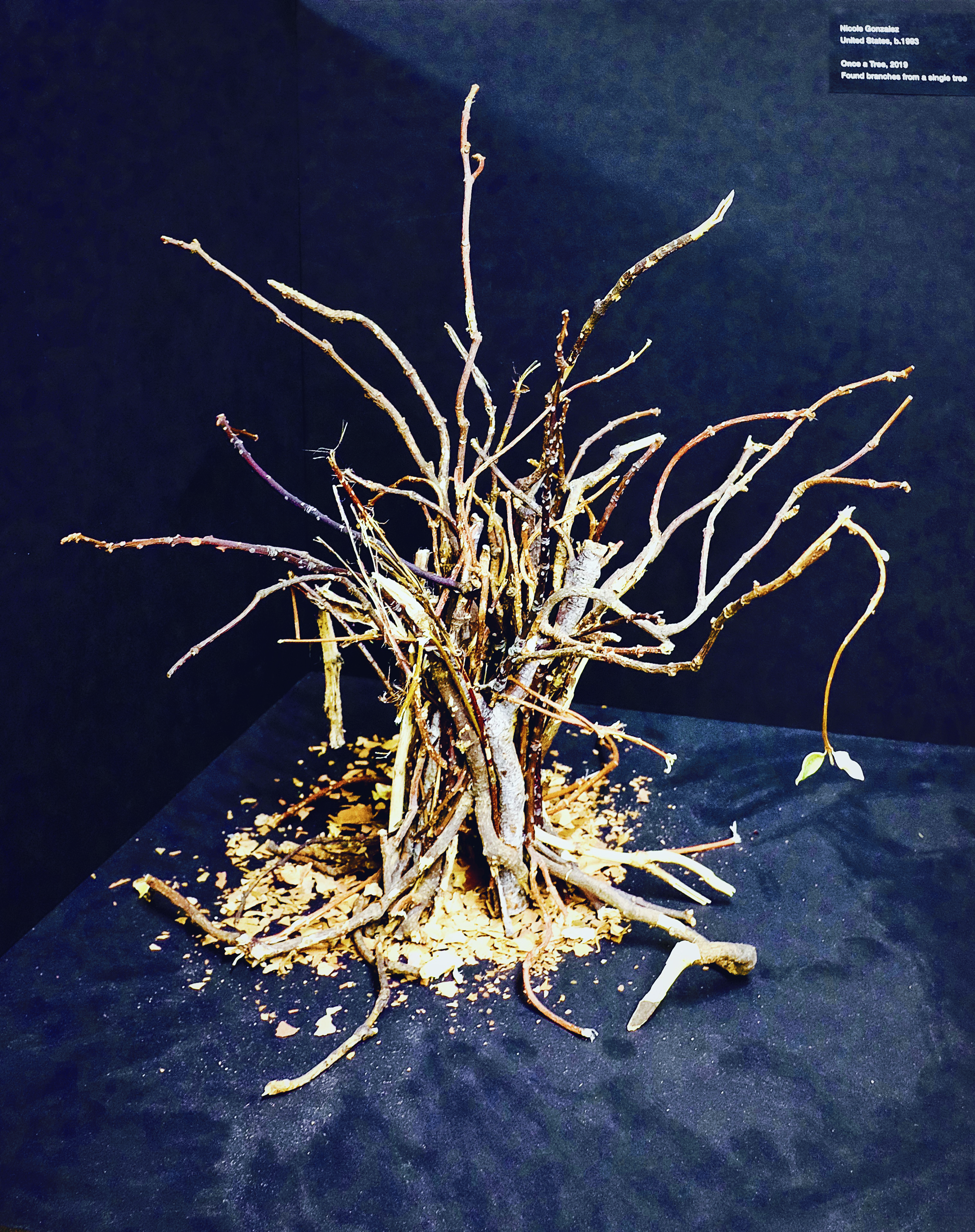 Once a Tree, 2019