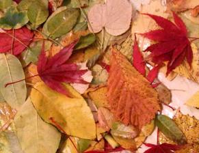 Celebrating the Autumn