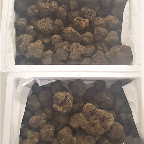 Fresh black Autumn 2nd class truffle Tuber uncinatum minimum order of 500gr
