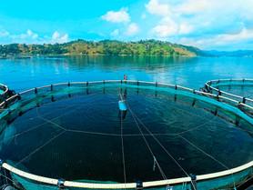 """Presentan el programa """"Cuidamos"""" para pesca sustentable de Mojarra"""