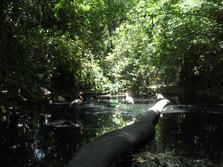 Ley de Biodiversidad; error en su artículo 3