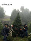 Arranca campaña adquiere un árbol natural de Navidad en la Ciudad de México
