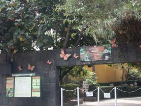 Mes de la Mariposa Monarcas en el Mariposario de Chapultepec