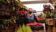 Expo venta de Flor de Nochebuena en Xochimilco