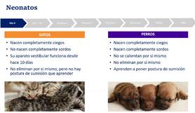 Semeganzas  y diferencias entre gatos y perros