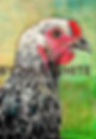 Portrait drawing of Golden Sex Link chicken