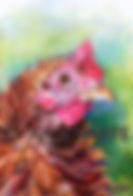 Portrait drawing of Frizzle hen named Ms Frizzle