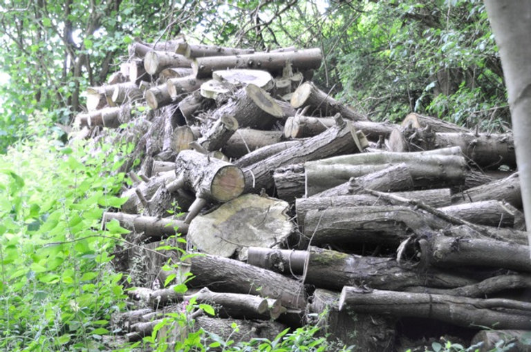 The woodpile.jpg
