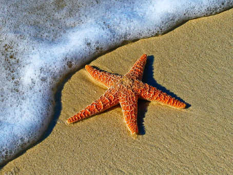 Stranded Starfish: Addressing the Systemic Segregation of Students with Disabilities