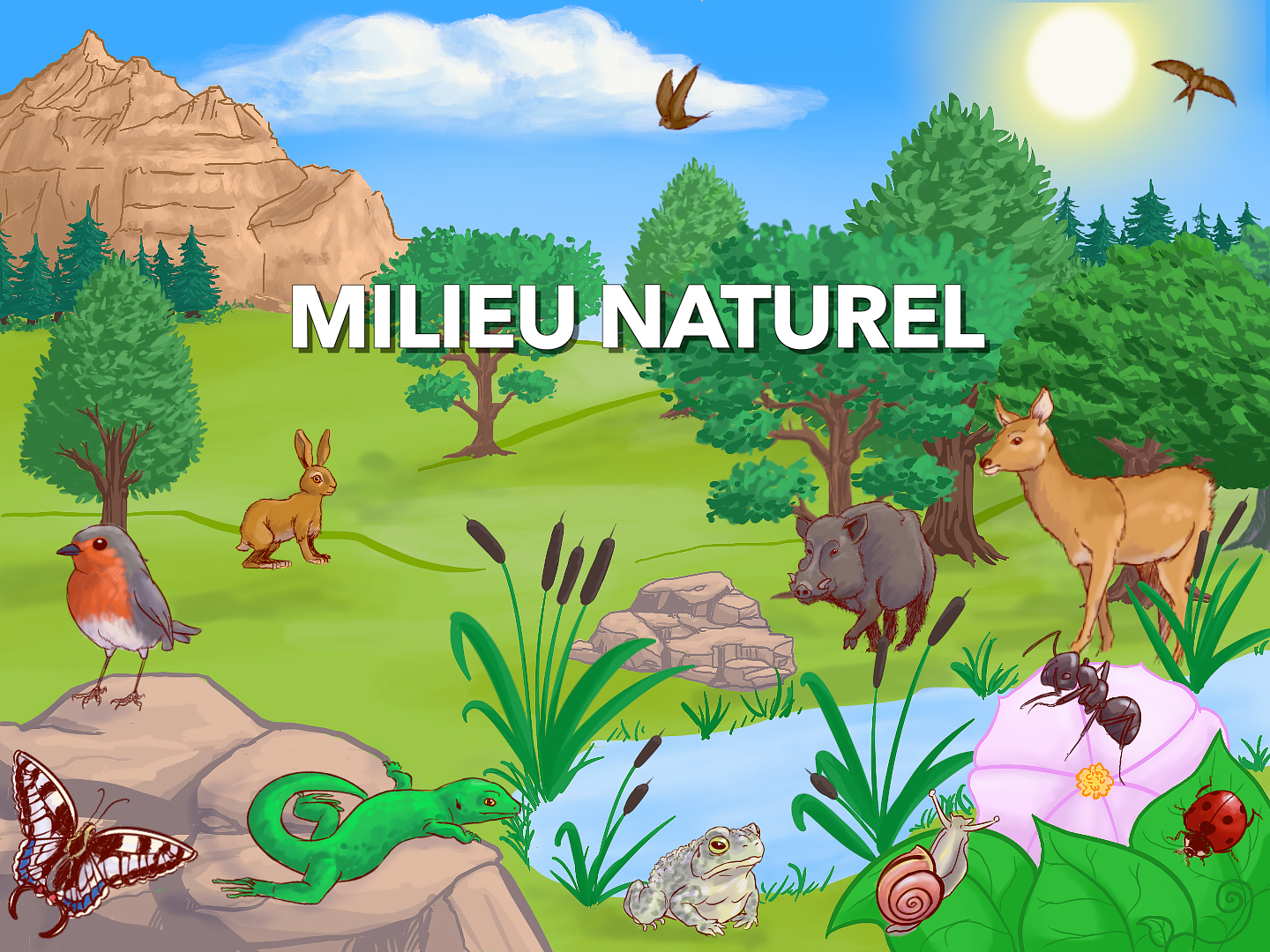 Animation milieu naturel