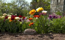 Herisson fleurs
