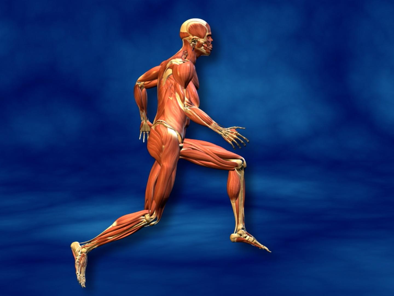 Muscles en mouvement
