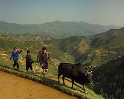 Chine rizière