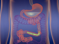 Animation digestion 1