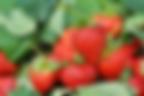 冬の果物.png