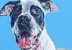 Corinne Jones - Man Dog - BEST_edited_ed