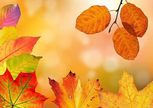 autumn-2020.jpg