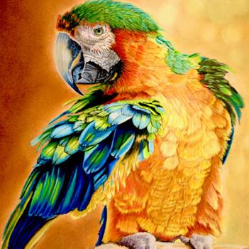3. SILVER Gabriela Thiecke Macaw Color Pencil and Pastel.jpeg