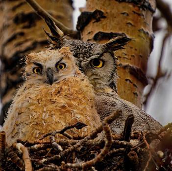 3. SILVER Dale Paul  Watchful Eye Photography.jpg