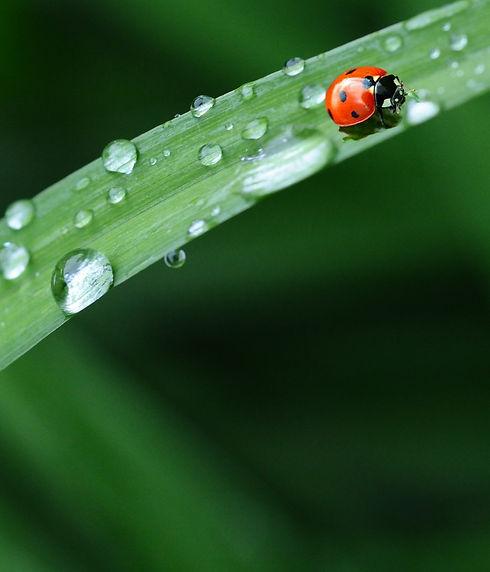 ladybug-574971_1920_edited.jpg