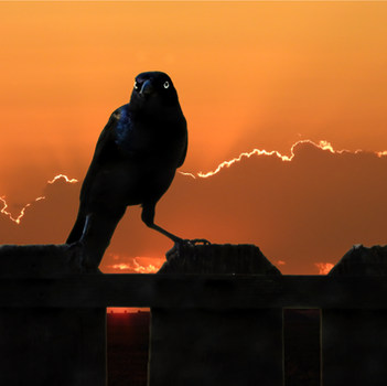 3. SILVER Elizabeth Kayl Sunset Sentinel Digital Photography.jpg