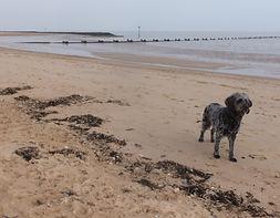 ABOUT Lola on Beach 1.JPG