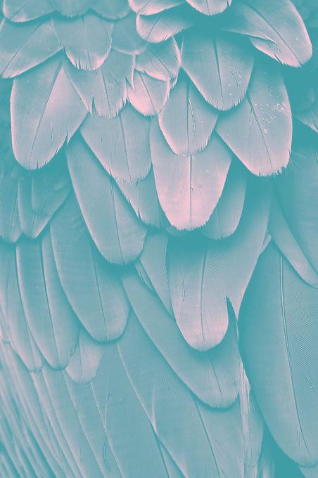 Feathers_edited_edited.jpg