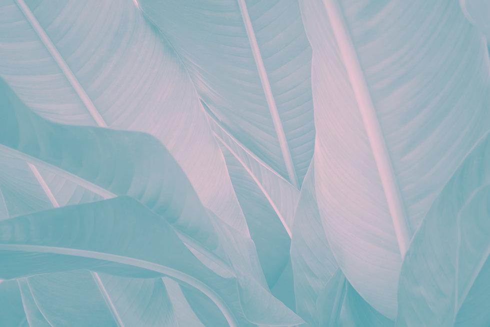 Banana%20Leaves_edited.jpg