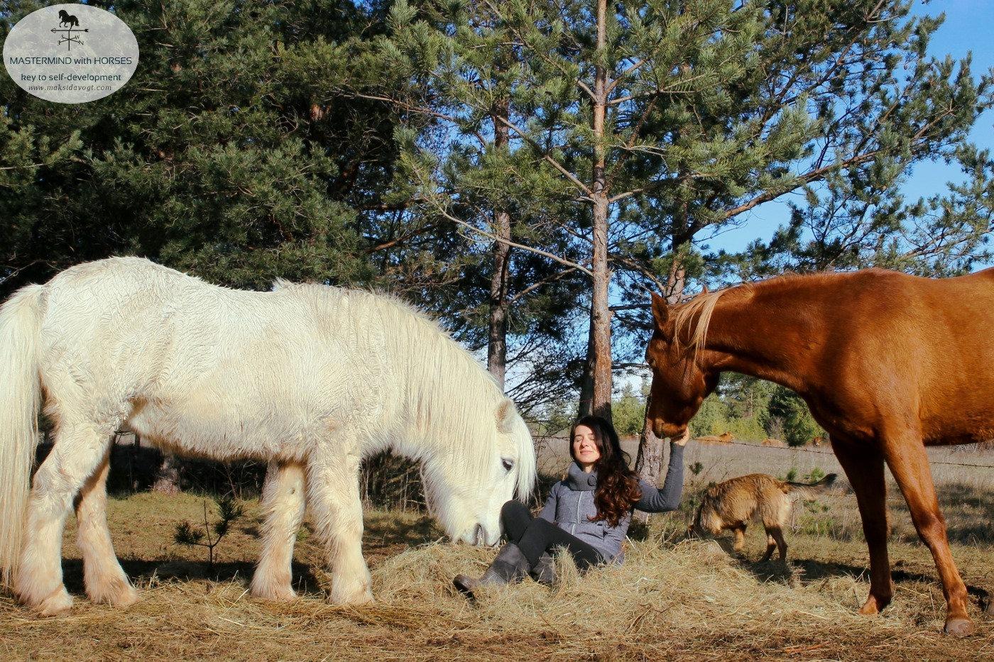MASTERMIND with HORSES